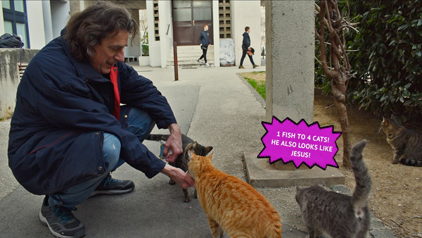 man feeding cats in street
