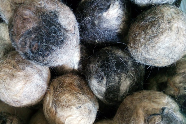balls from dog hair