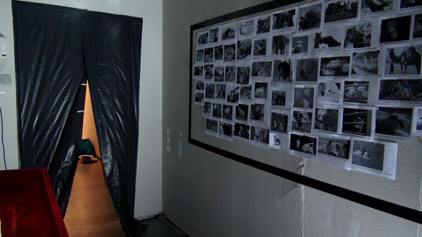 animal petitions on wall in dark room