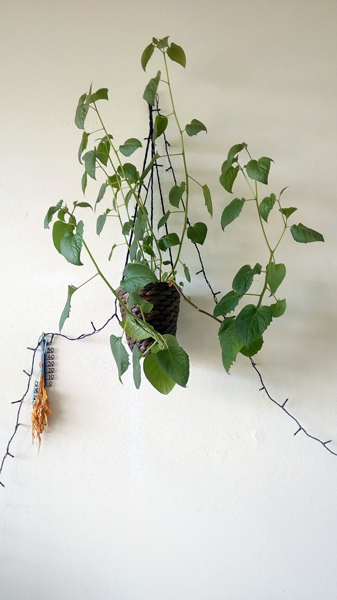 ivana-filip-photography-plant-TI